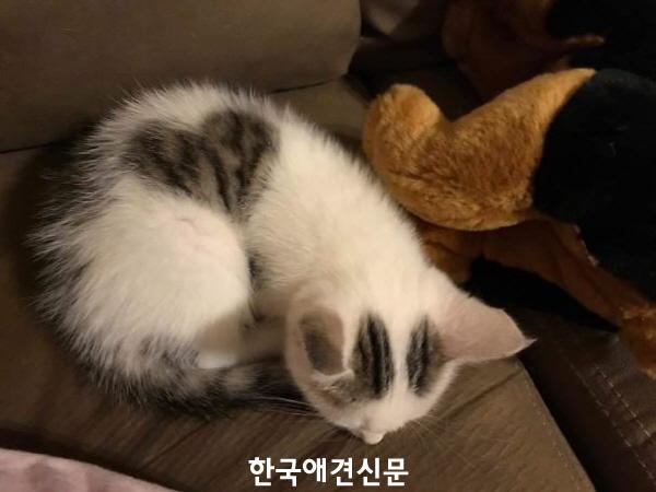 [크기변환]chat coeur b.jpg