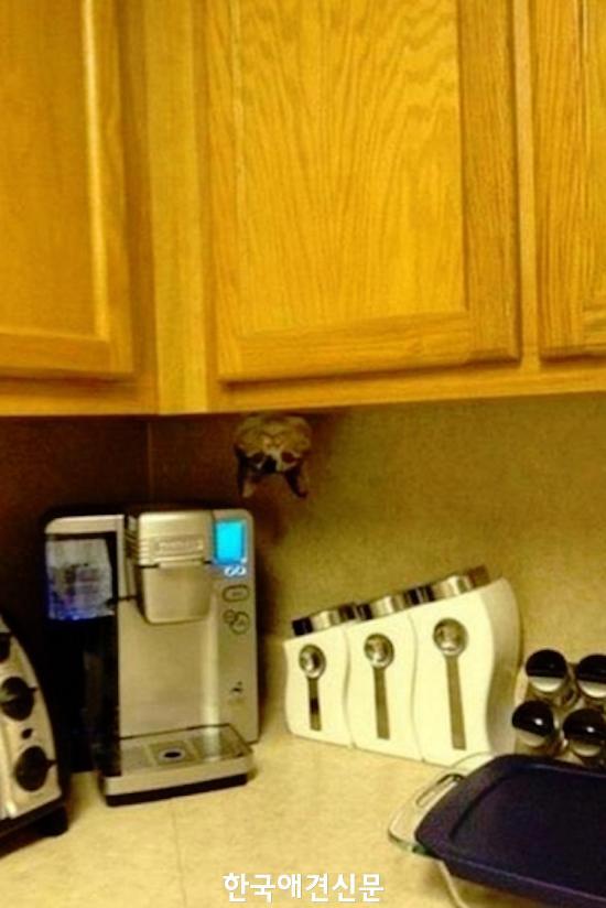 hiding-cat.jpg