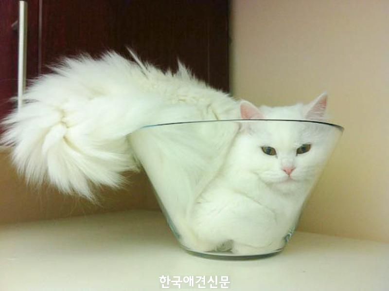 cats-fitting-in-small-spaces-20.jpg