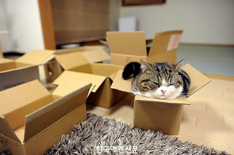 cats-fitting-in-small-spaces-17.jpg