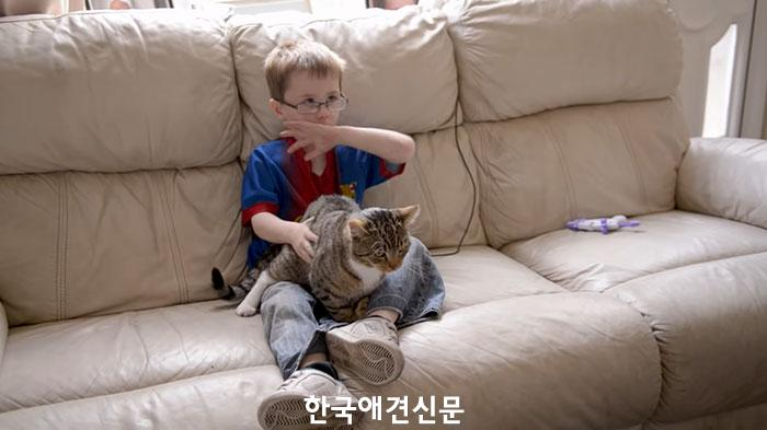 사진=유튜브 Cats Protection.jpg