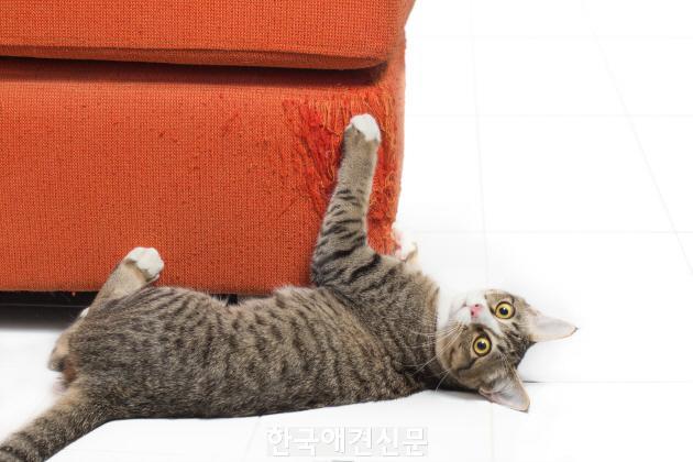 [크기변환]비터애플-스크래치 하는 고양이.jpg