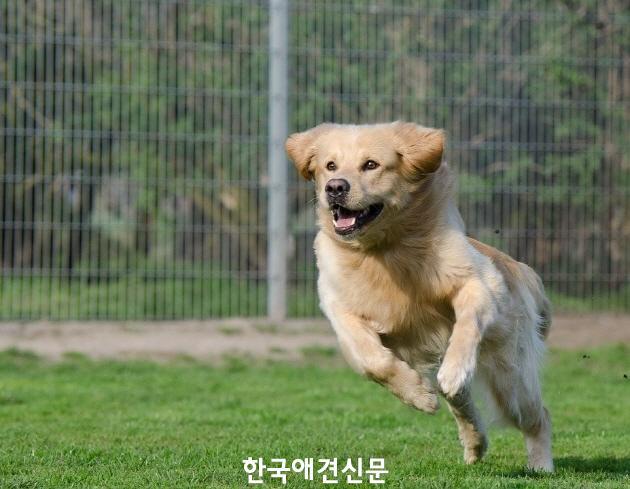 [크기변환]runningdog3.jpg