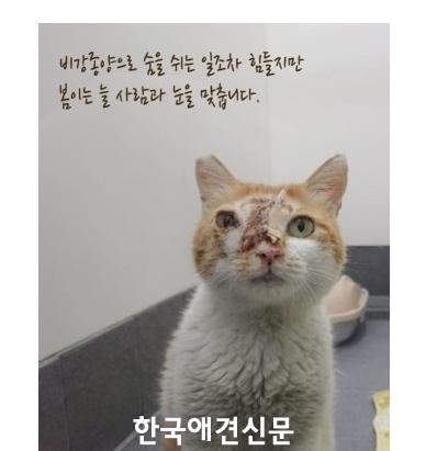 사본 -길고양이 봄이 모금.png