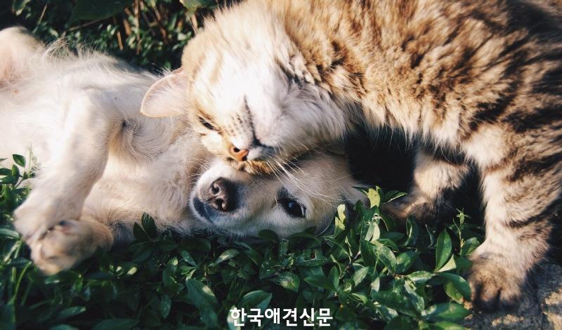 [크기변환]강아지와 고양이2.jpg