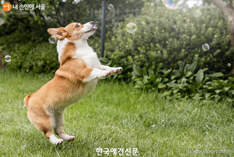 [크기변환]출처 서울시 홈페이지.jpg