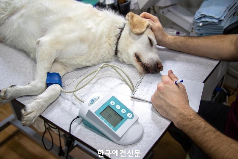 [크기변환]강아지 치료.jpg