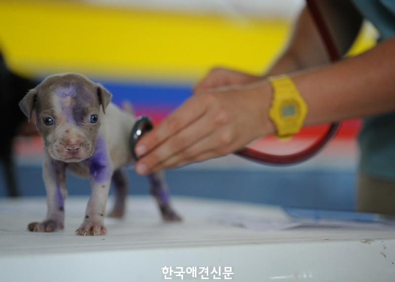 [크기변환]강아지치료2.jpg