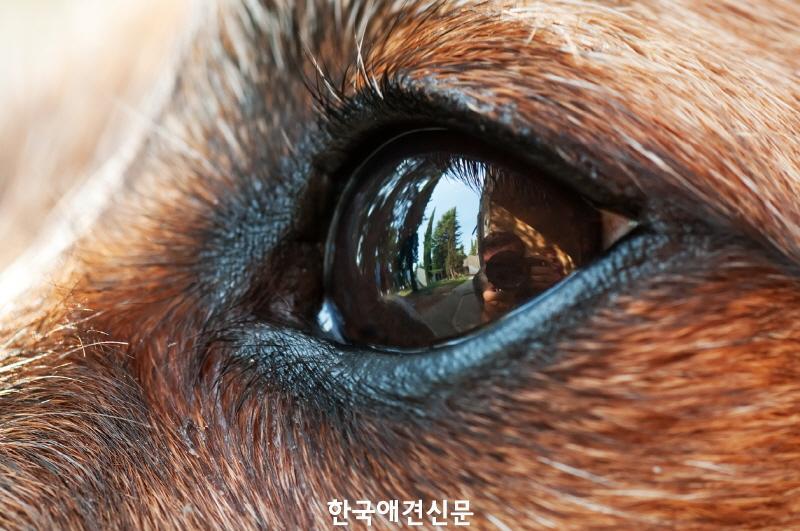 [크기변환][보도자료] 펫닥아이트 반려동물 워킹스루 홍채추적 인식기술 도입.jpg