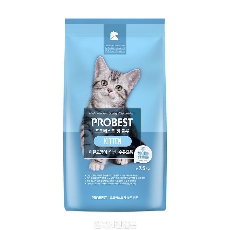 [크기변환]probest_cat_blue_kitten_썸네일1000.jpg