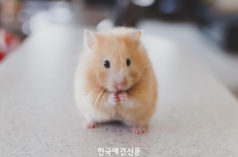 [크기변환]쥐.jpg