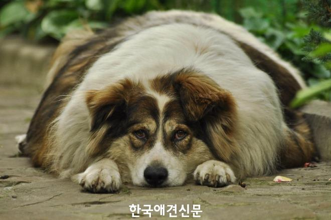 [크기변환]pat dog.jpg