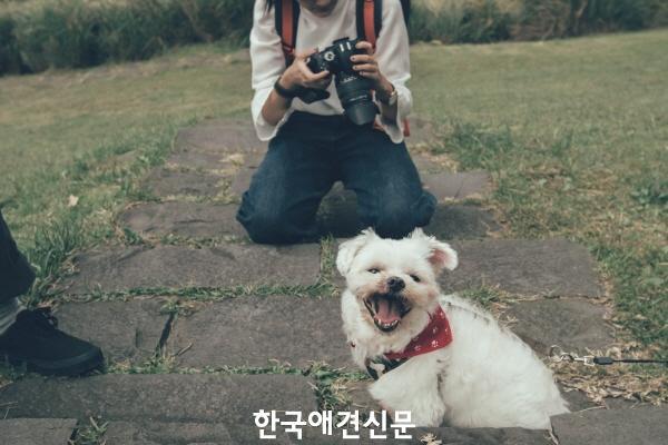 [크기변환]반려동물 촬영.jpg