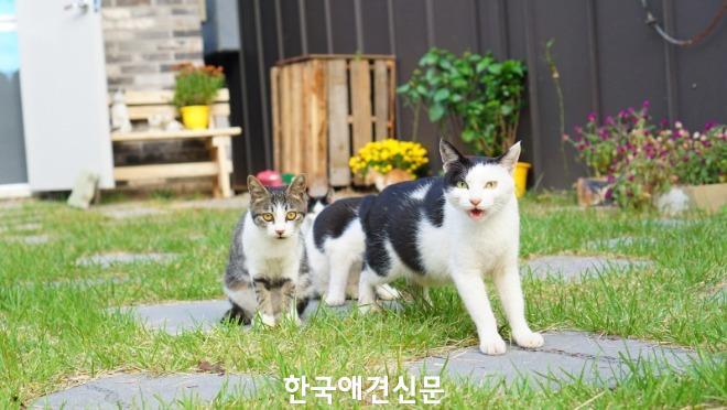 [크기변환]고양이들.jpg