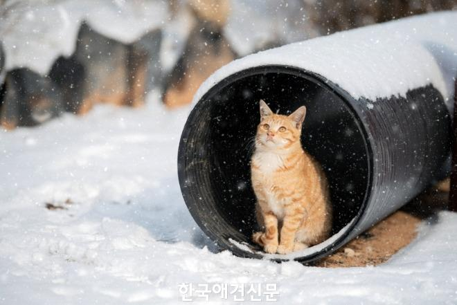 [크기변환]우수상_봄을 기다리며.jpg