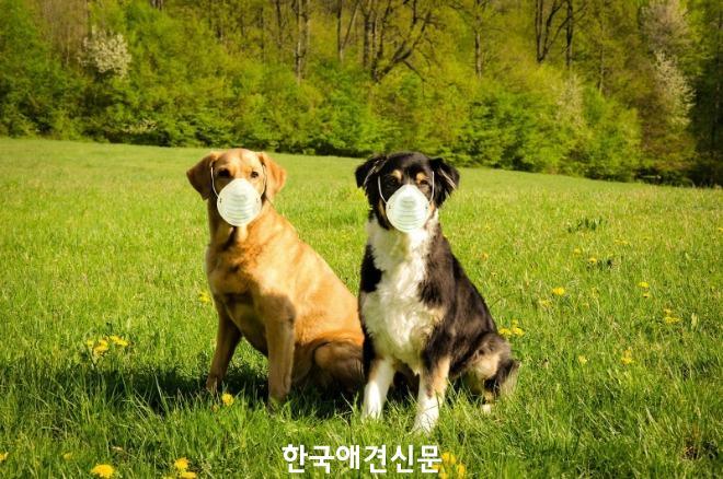 [크기변환]코로나_반려동물.jpg